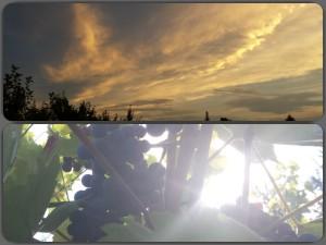Aussicht_Collage